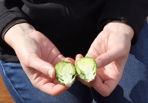Brussel Sprout Snip